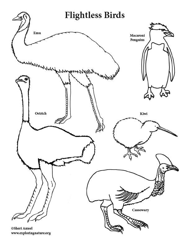 Flightless Birds Coloring Page