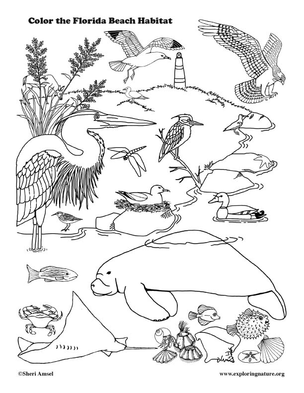 florida animals coloring pages - photo#2