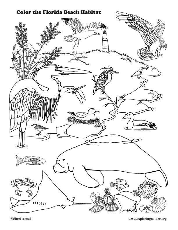 Florida Coastal Animals Coloring Page Florida Coloring Pages
