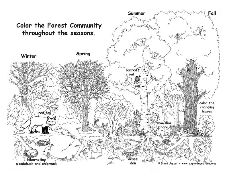 Forest community throughout the year coloring page