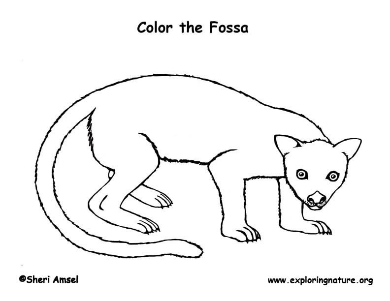 Fossa Coloring Page