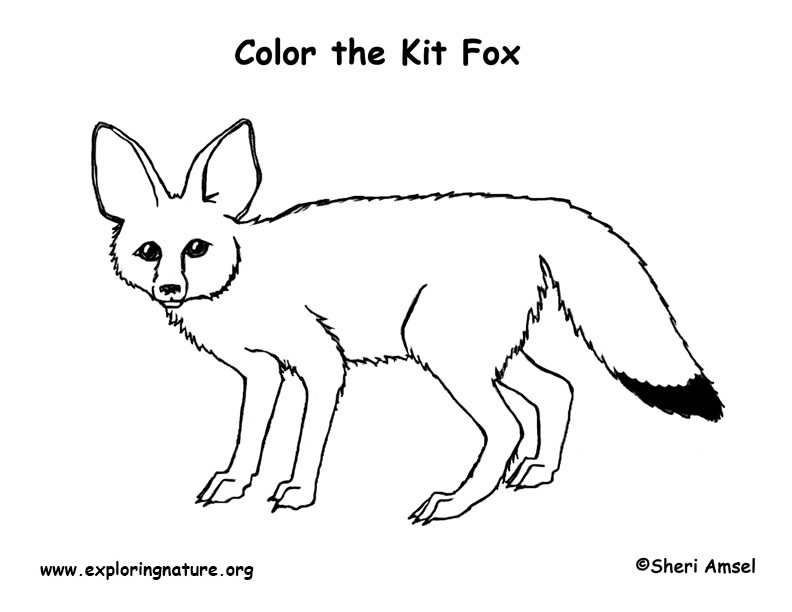 how to draw a kit fox