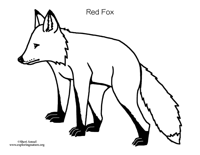 Fox and Kits Coloring Page