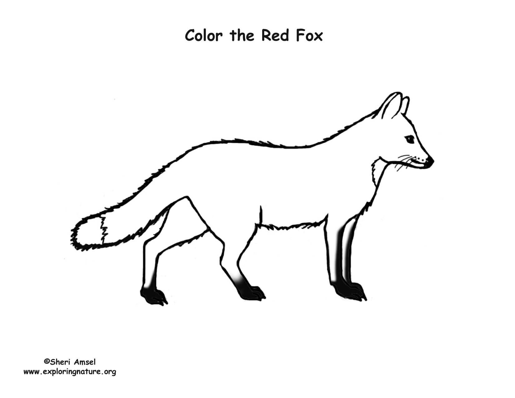 Fox red coloring page for Red fox coloring page