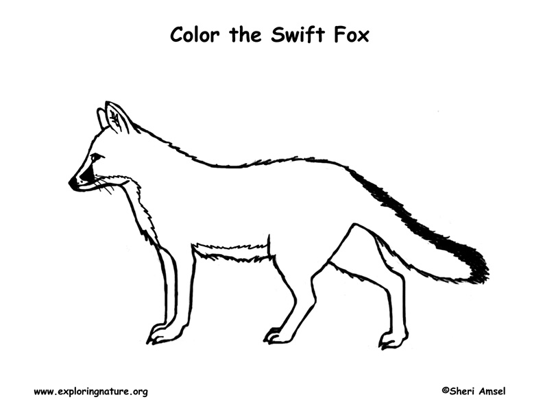 Fox Swift Coloring Page