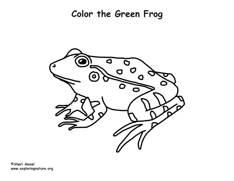 Frog Green Coloring Page