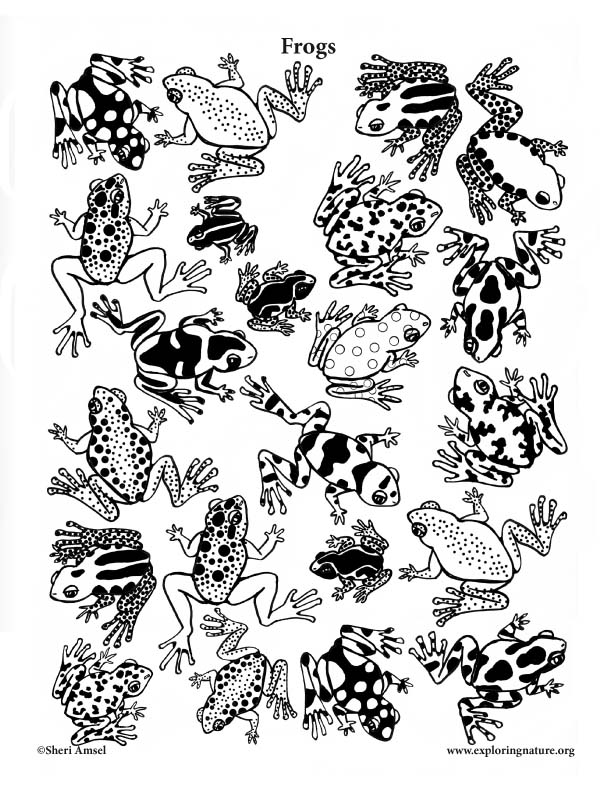 Frogs (Assorted) Coloring Page