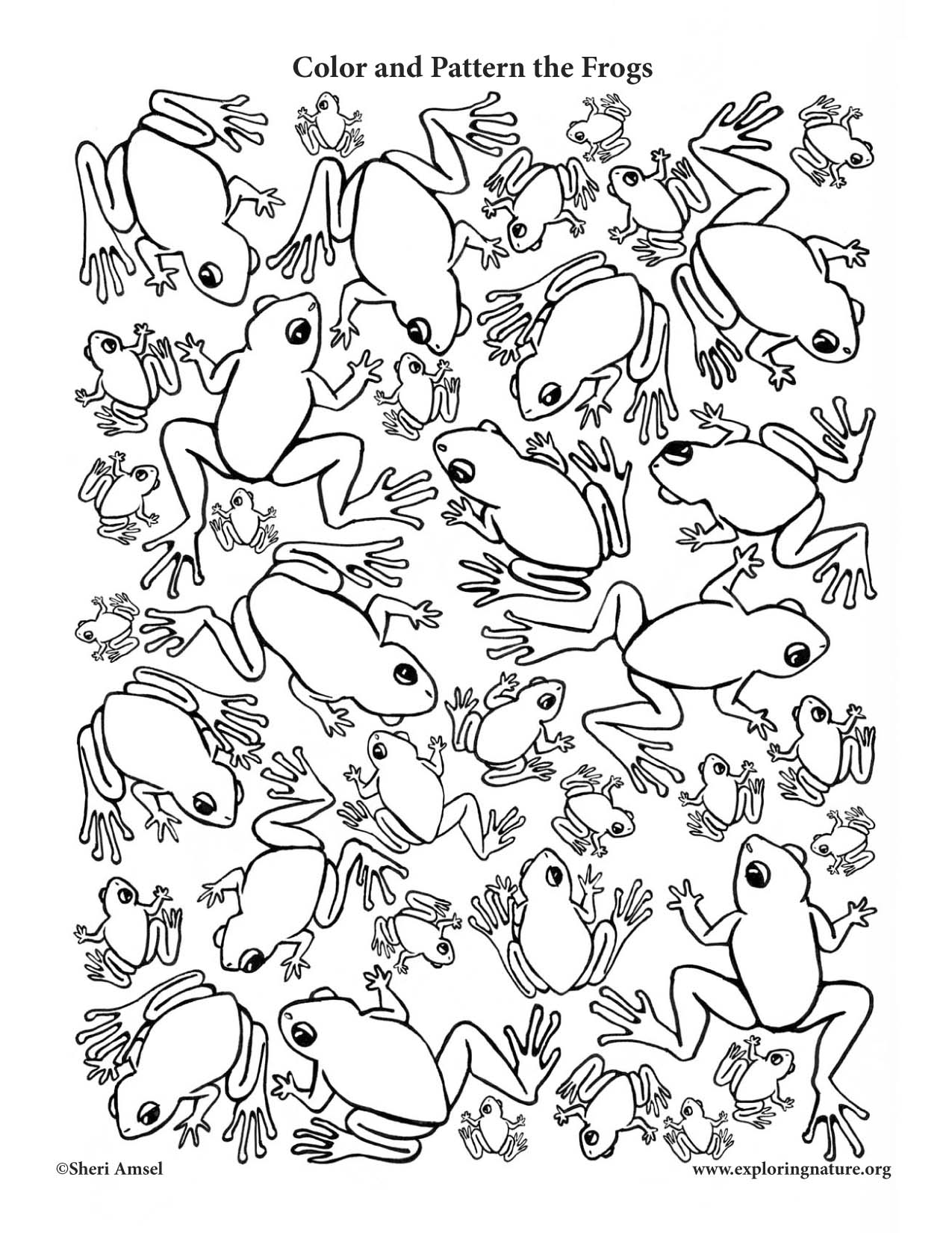 Frog Coloing Page
