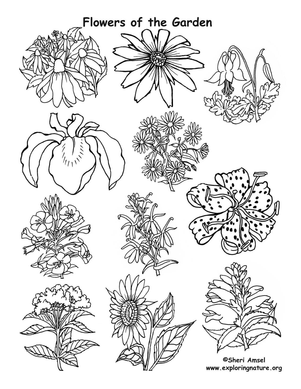 Flowers of the Garden, flower garden