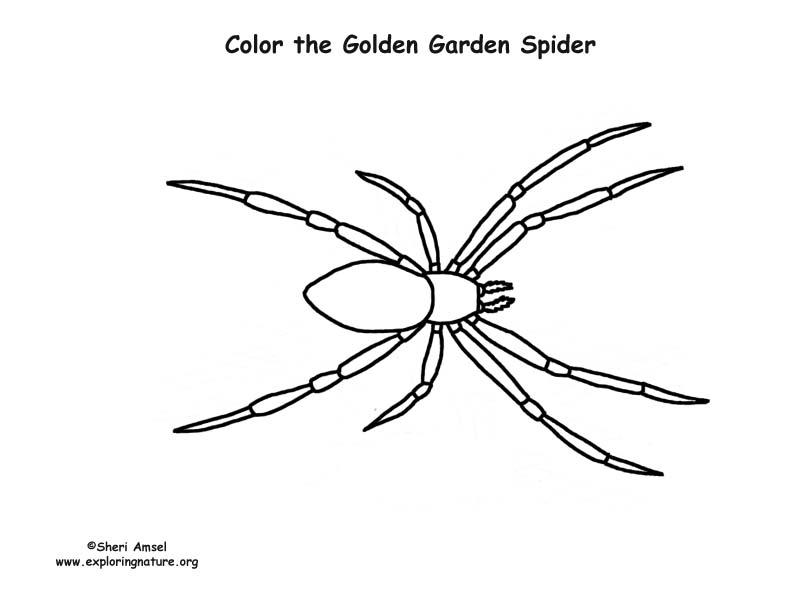 Golden Garden Spider Coloring Page
