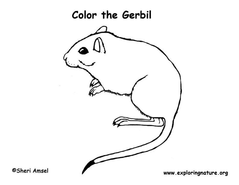 Gerbil Coloring Page