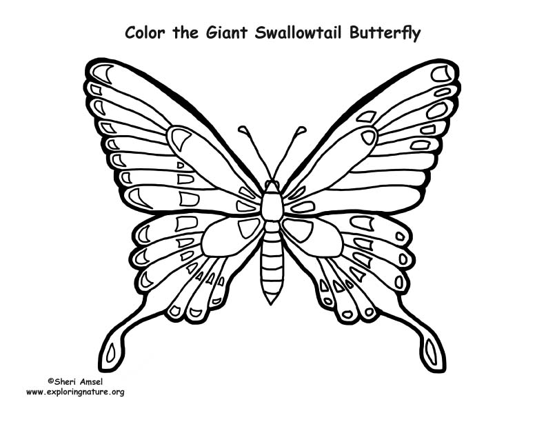Butterfly Coloring Pages Pdf : Butterfly giant swallowtail coloring page