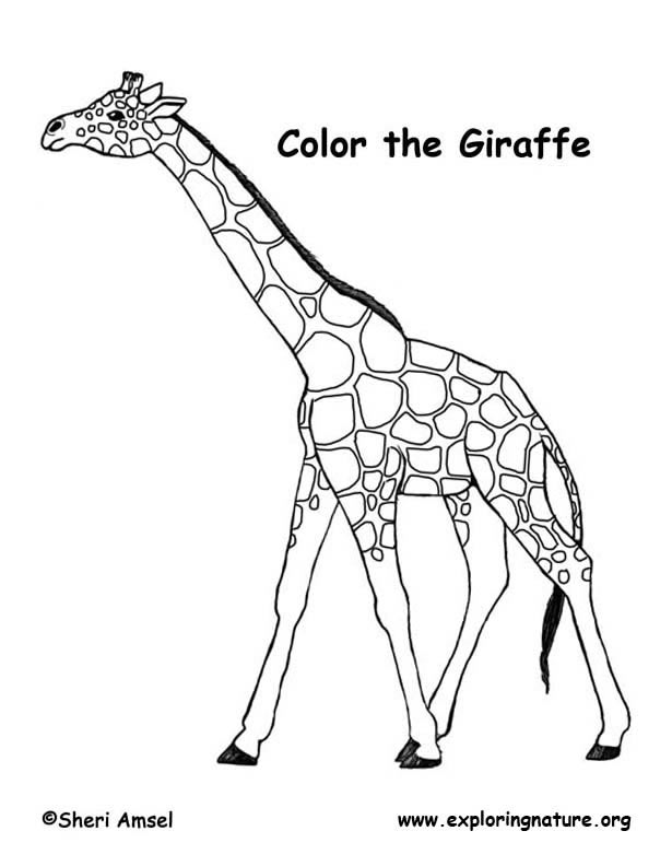 Free printable coloring pages giraffe 2015 for Giraffe coloring pages to print