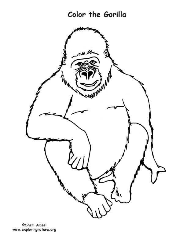 coloring page gorilla gorilla coloring page - Silverback Gorilla Coloring Pages