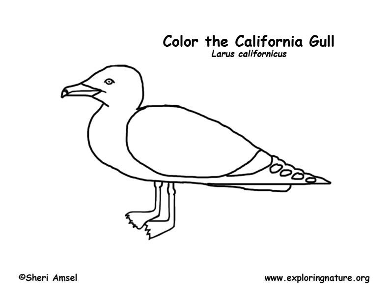 Gull (California) Coloring Page