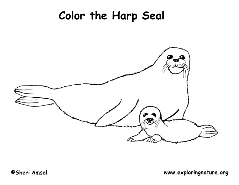 Seal Harp Coloring Page Seal Coloring Page