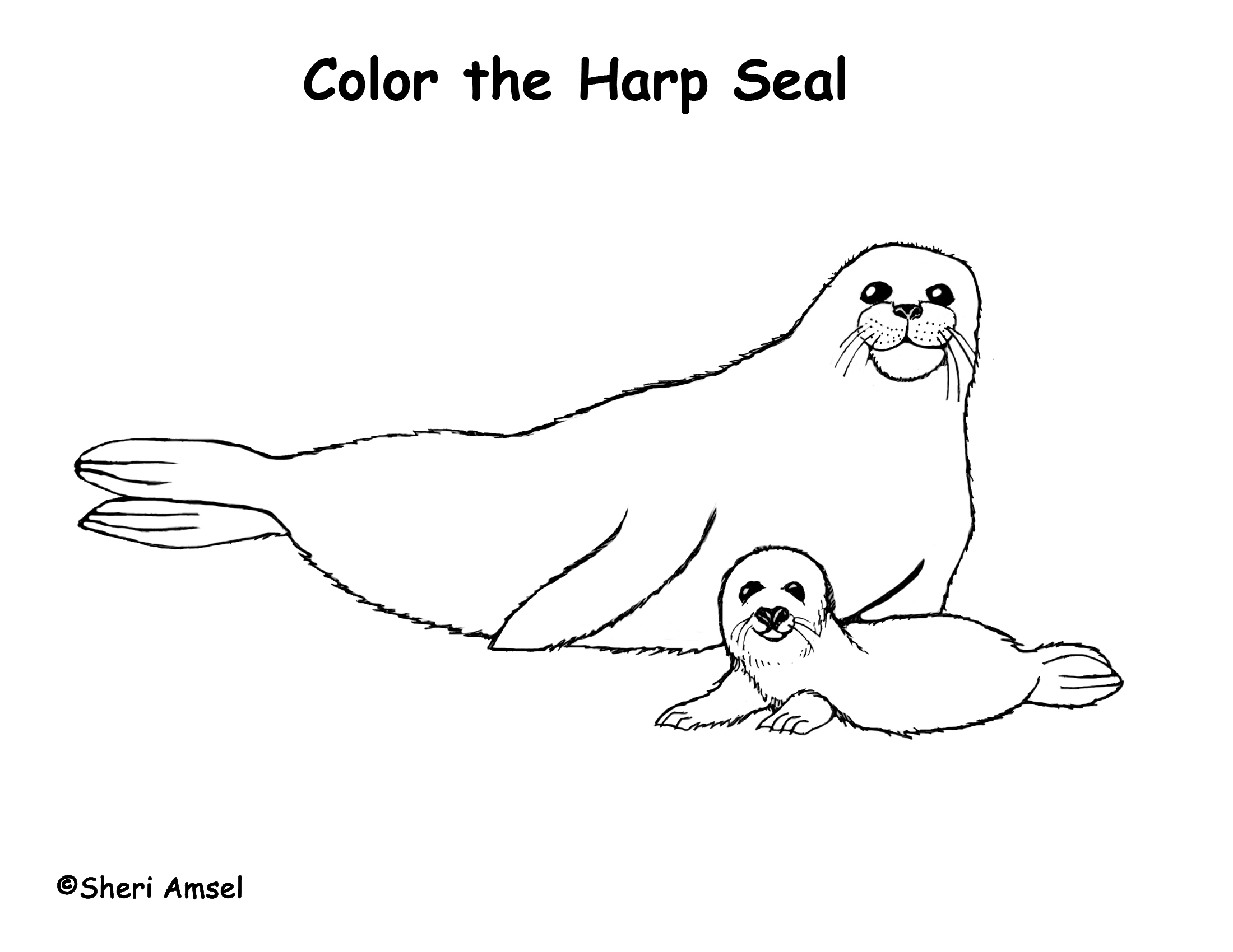 seal coloring pages Seal (Harp) Coloring Page seal coloring pages