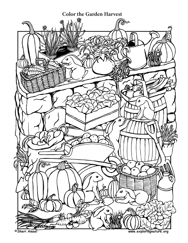 Garden Harvest Coloring Page