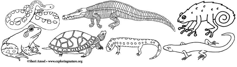 lizard and snake coloring pages - photo#8
