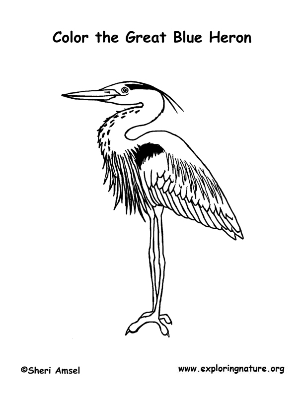 Heron Great Blue Coloring Page