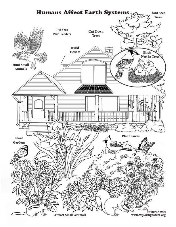 Humans Affect Earth Systems - Coloring Page