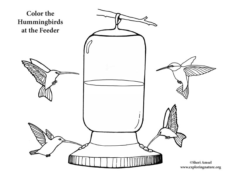 Hummingbirds at Feeder Coloring Page