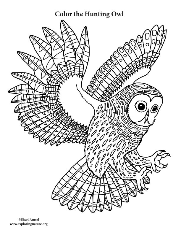 Owl Hunting Coloring Page
