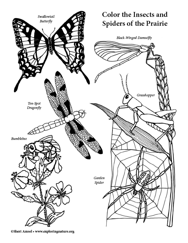 Insects and  Spiders of the Prairie Coloring Page