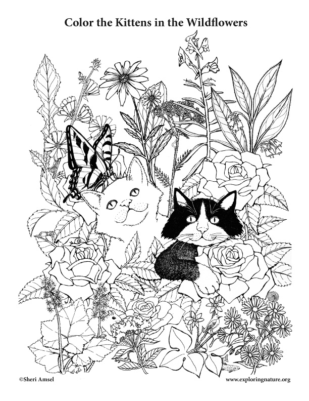 Kittens in the Wildflowers Coloring Page
