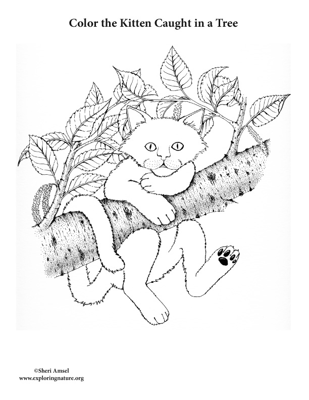 Color the Kitten Caught in a Tree Coloring Page