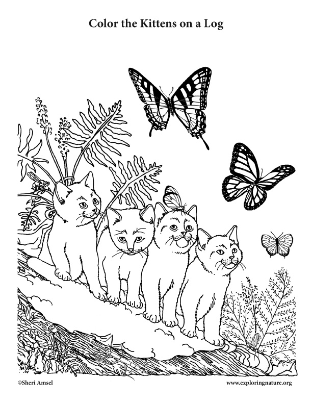 Kittens on a Log Coloring Page