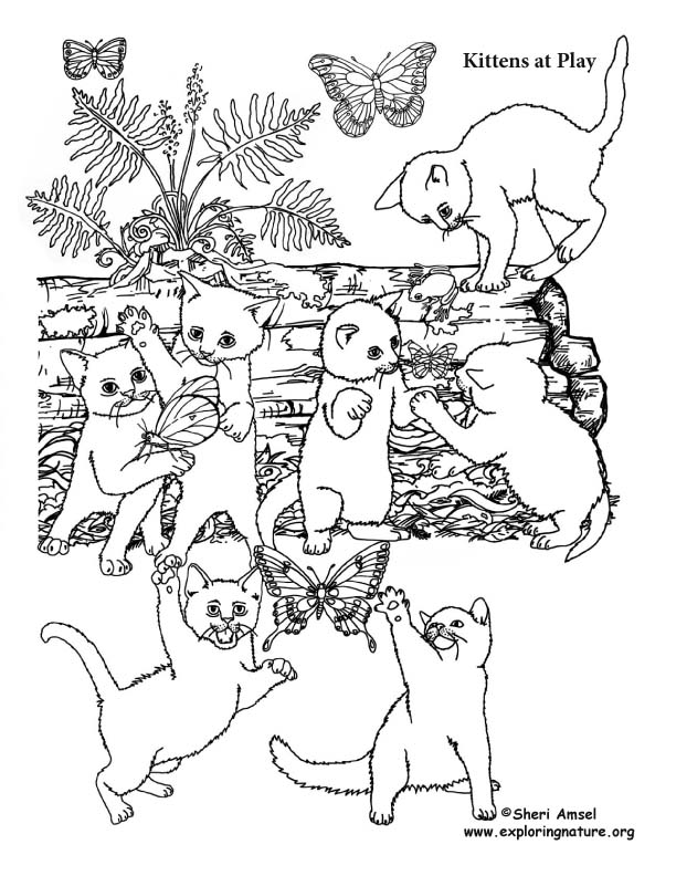 Kittens at Play Coloring Page