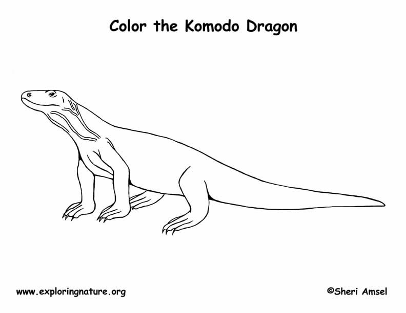 Komodo Dragon Coloring Page Komodo Coloring Page