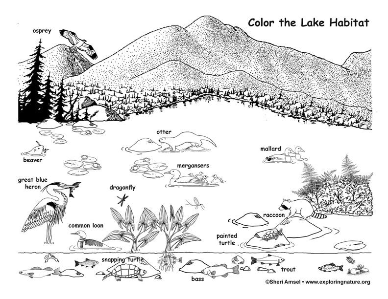 coloring pages on lake - photo#32