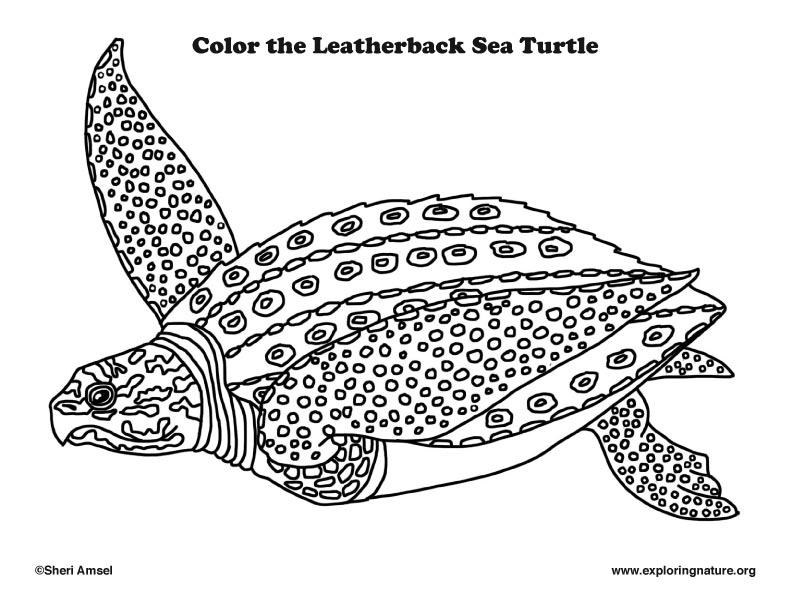 - Sea Turtle (Leatherback) Coloring Page