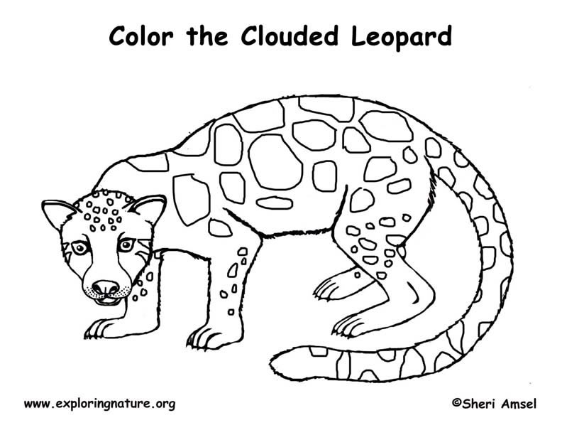 Leopard Cub Coloring Pages Pictures to Pin on Pinterest  PinsDaddy