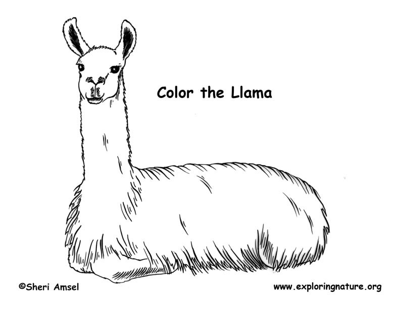 coloring pages llamas - photo#32