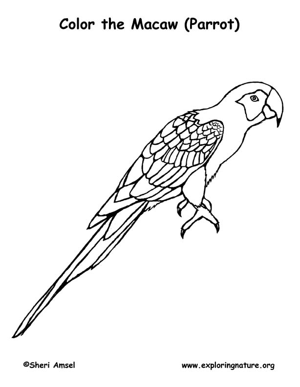 Macaw Parrot Coloring Page