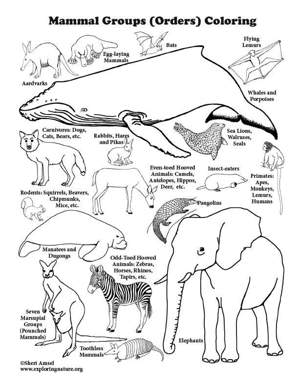 Mammal Groups Coloring Page