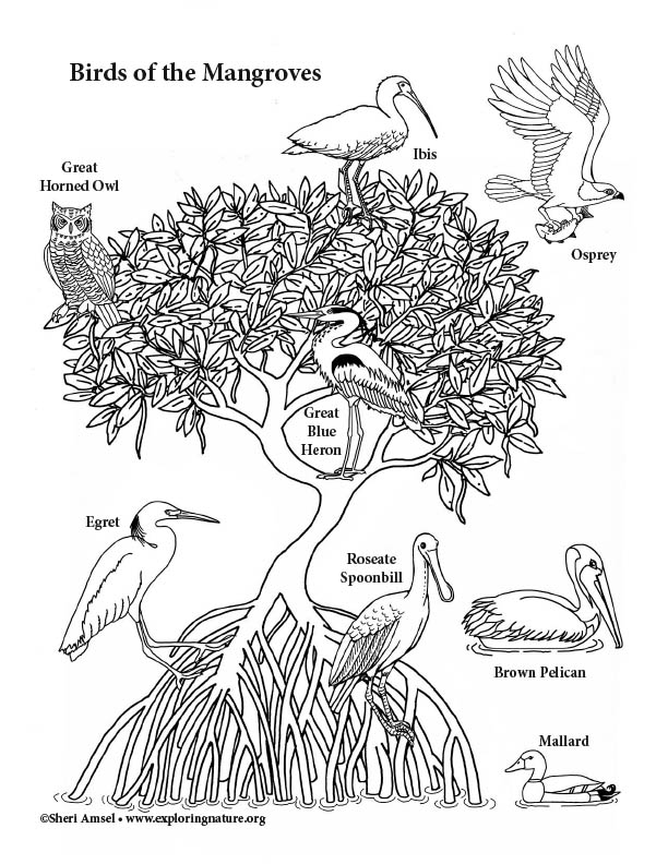 Mangrove Birds Coloring Page