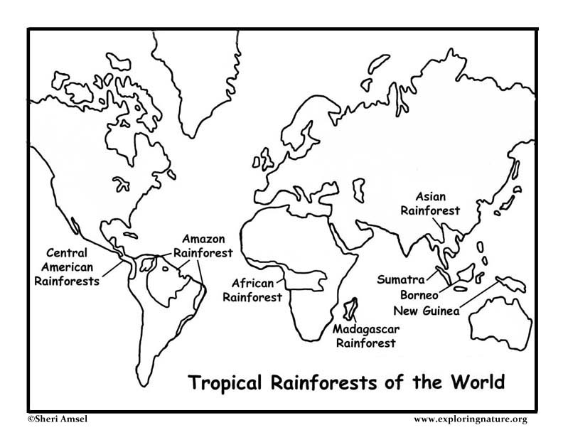 Rainforests Of The World Coloring Page