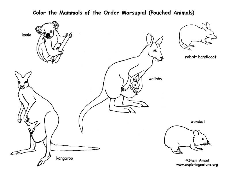 Marsupial Coloring PagesColoringPrintable Coloring Pages Free
