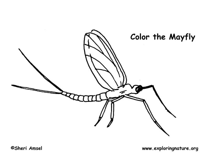 mayfly coloring page