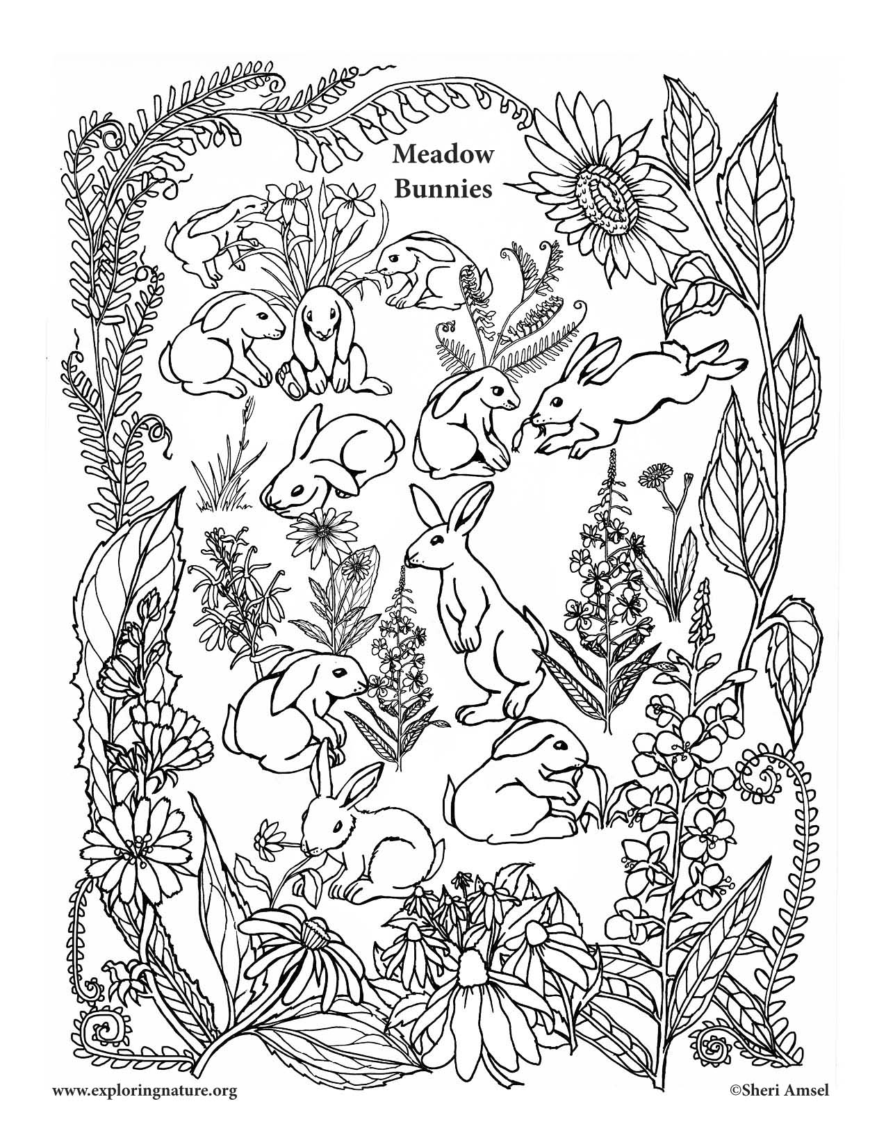 meadow animals coloring pages - photo#47