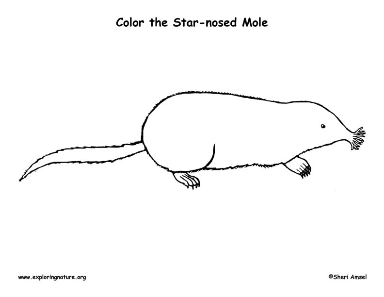 naked mole rat coloring pages - photo#21