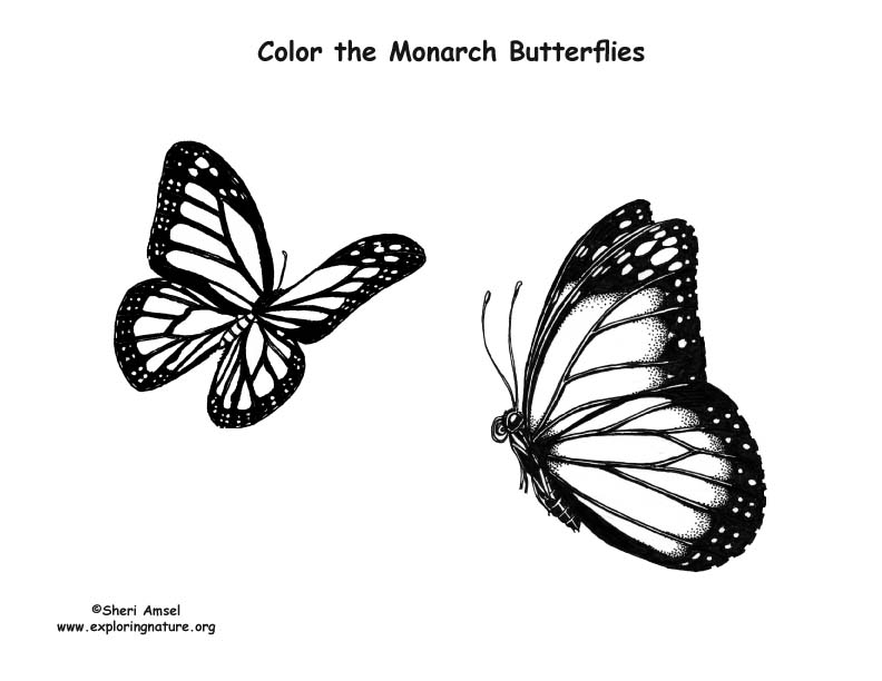 monarch coloring page - butterflies monarch coloring page
