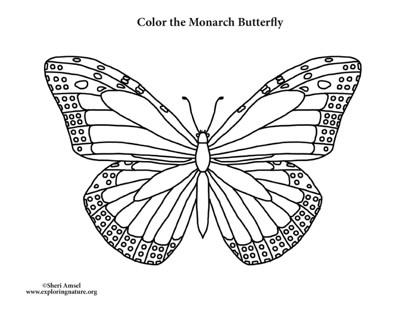 Butterfly Coloring Pages Pdf : Butterfly monarch coloring page