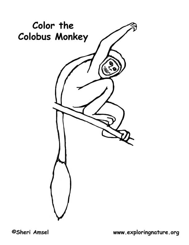 Monkey Coloring Pages Pdf : Black and white colobus monkey coloring page exploring