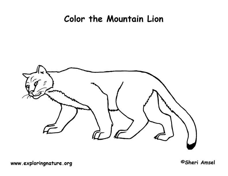 coloring pages mountain lion - photo #19