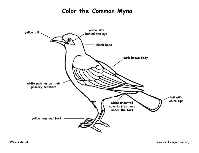 Myna Bird Labeling Page